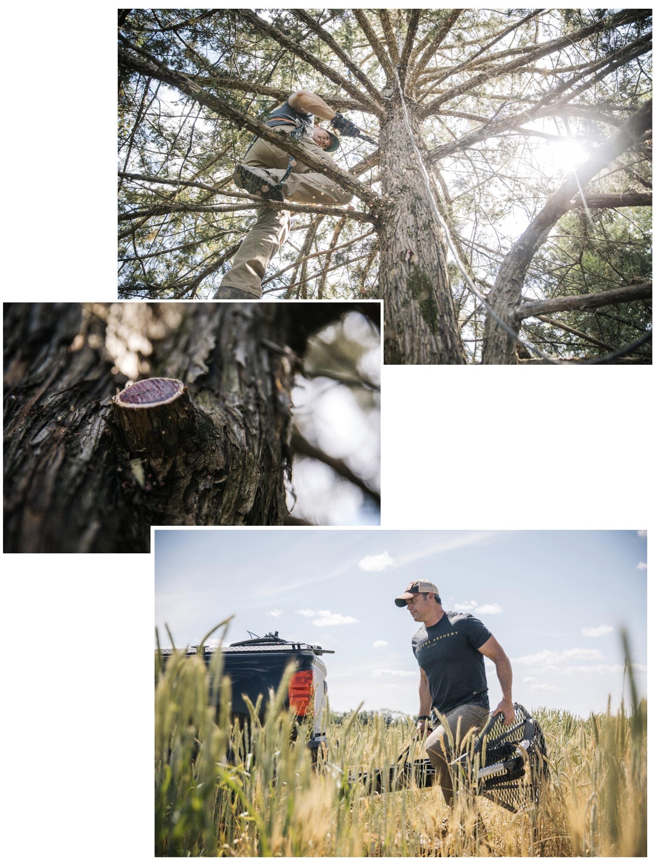 Six keys to tagging your target buck | Mathews Archery